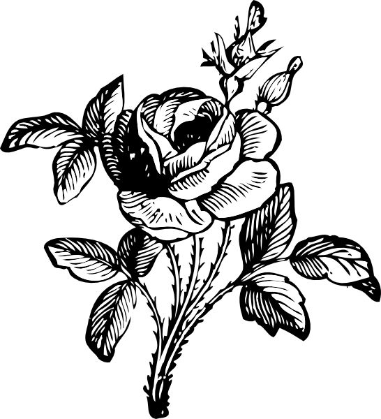 Rose Clipart Black And White Free