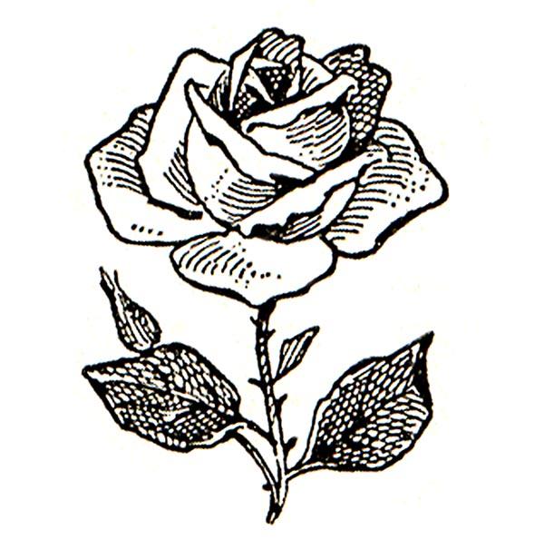 600x605 Rose Black And White Clip Art Flowers Black And White Roses