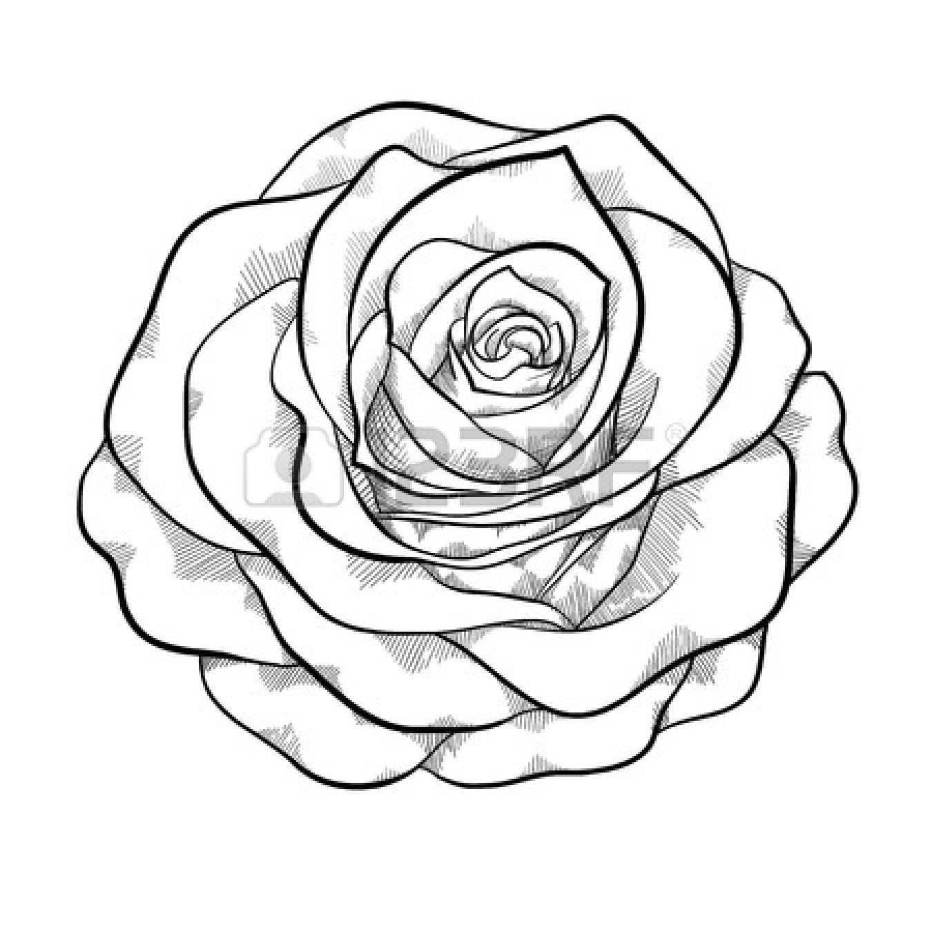 1350x1350 Simple Black And White Rose Clipart