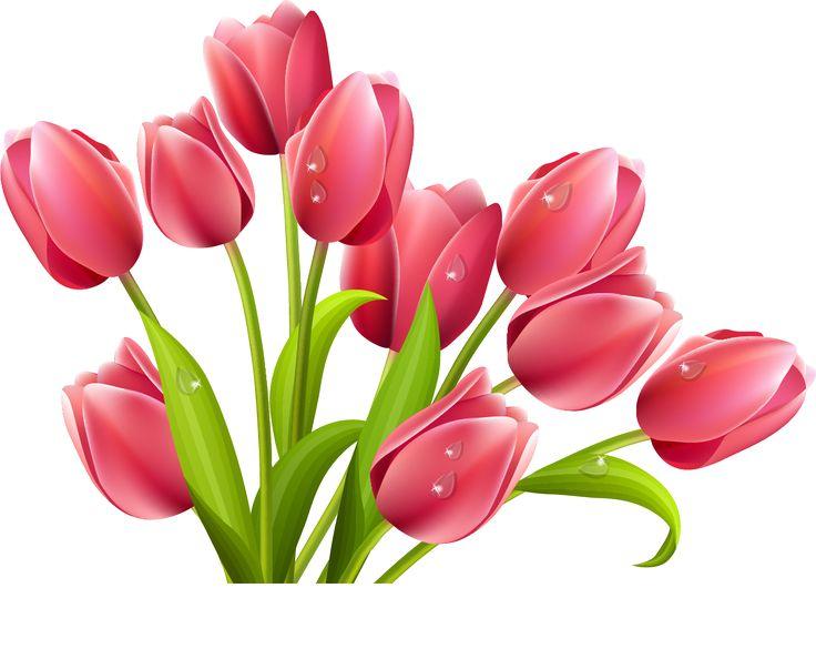 736x594 336 Besten Clip Art Flowers Two Bilder Auf Blumen