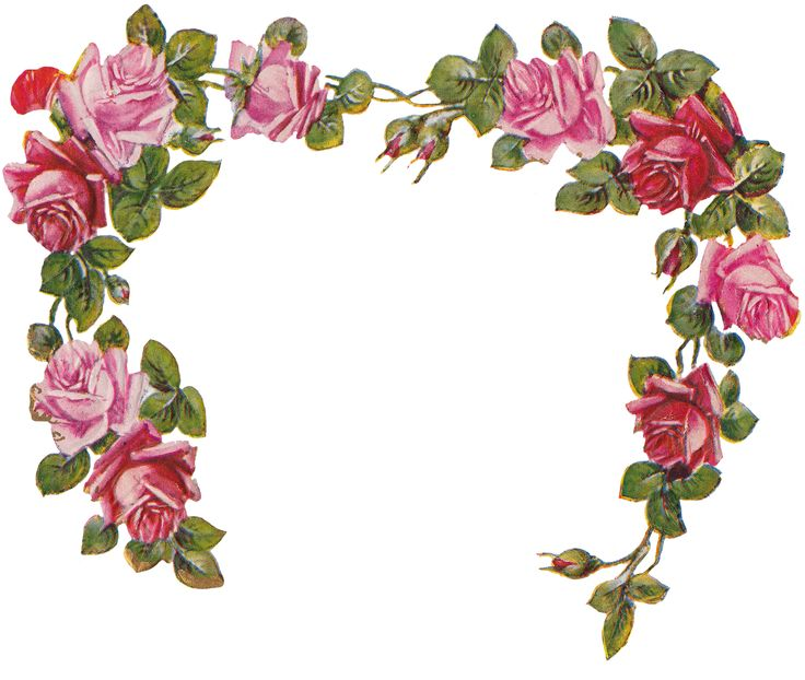 Rose Clipart No Background