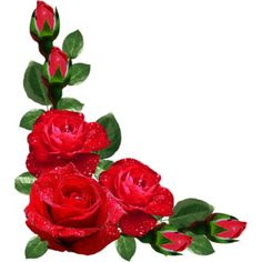 236x236 Red Roses Transparent Png Clipart Kvety Red Roses