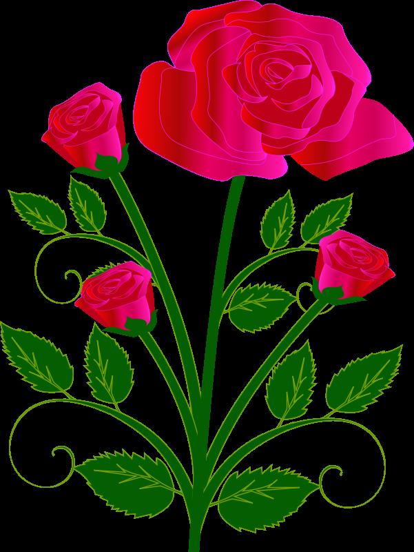 601x800 Single Pink Rose Clip Art
