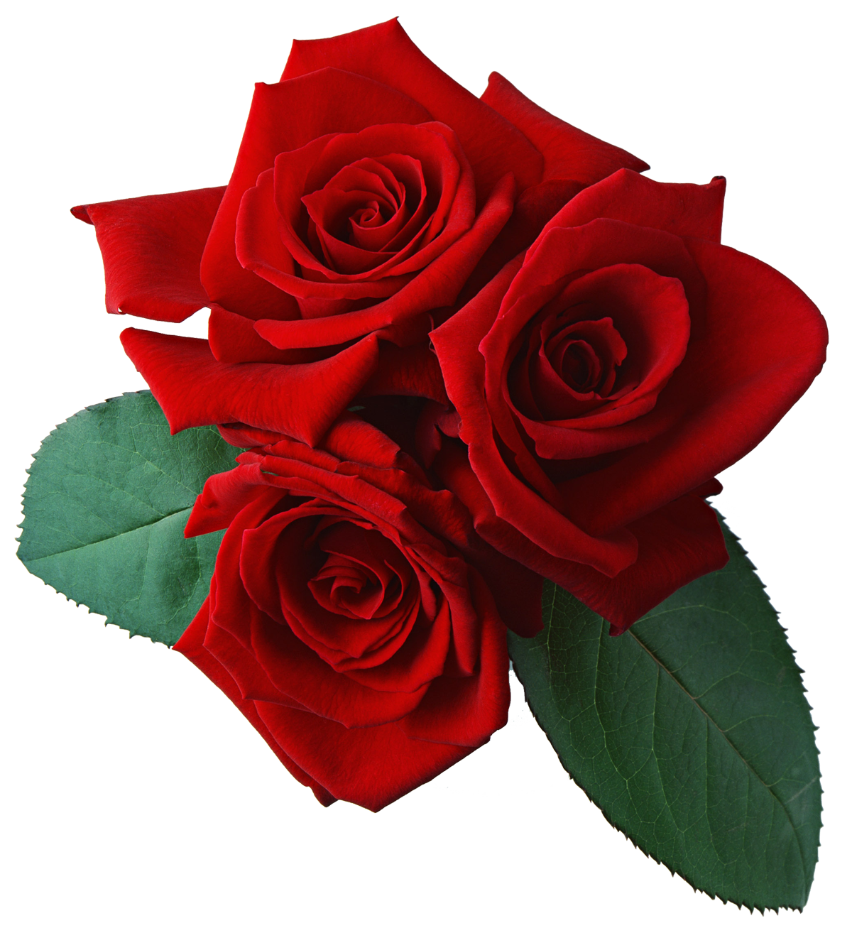 1200x1307 REd Rose PNG with leaf Transparent