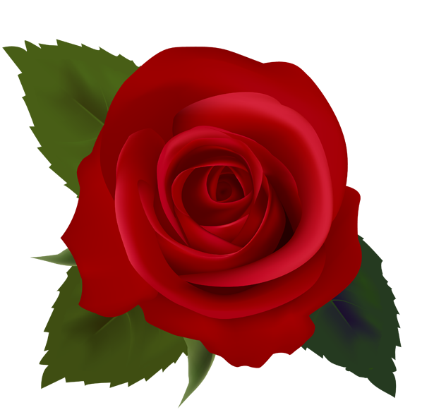 615x591 Red clipart rose