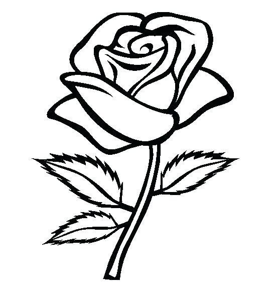 554x565 Rose Clipart Rose On Google Images Clip Art Pages Rose Clipart