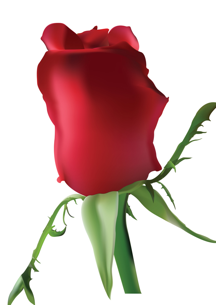 690x976 Rose Clipart One
