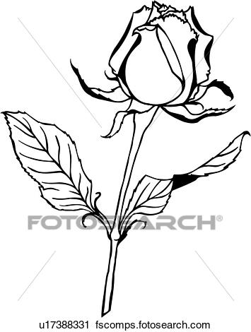 355x470 Clipart Of , Flower, Ornaments, Rose, Varieties, U17388331