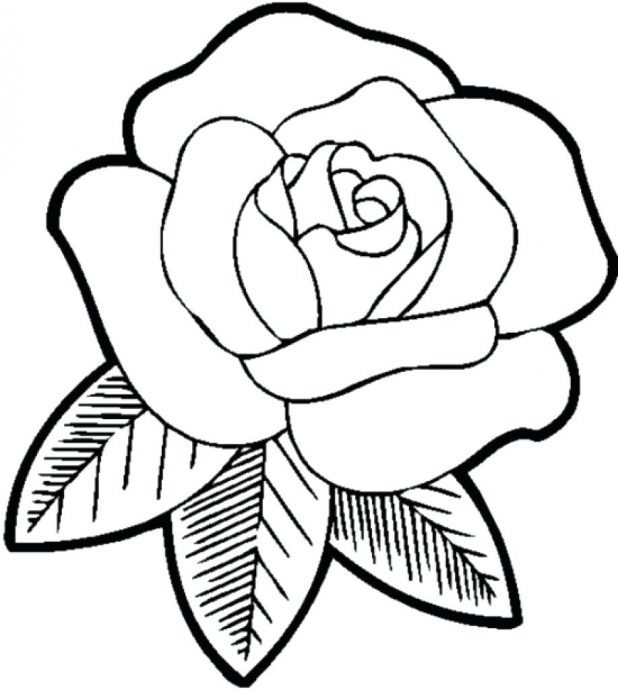618x690 Coloring Pages Captivating Rose Color Pages. Free Online Rose
