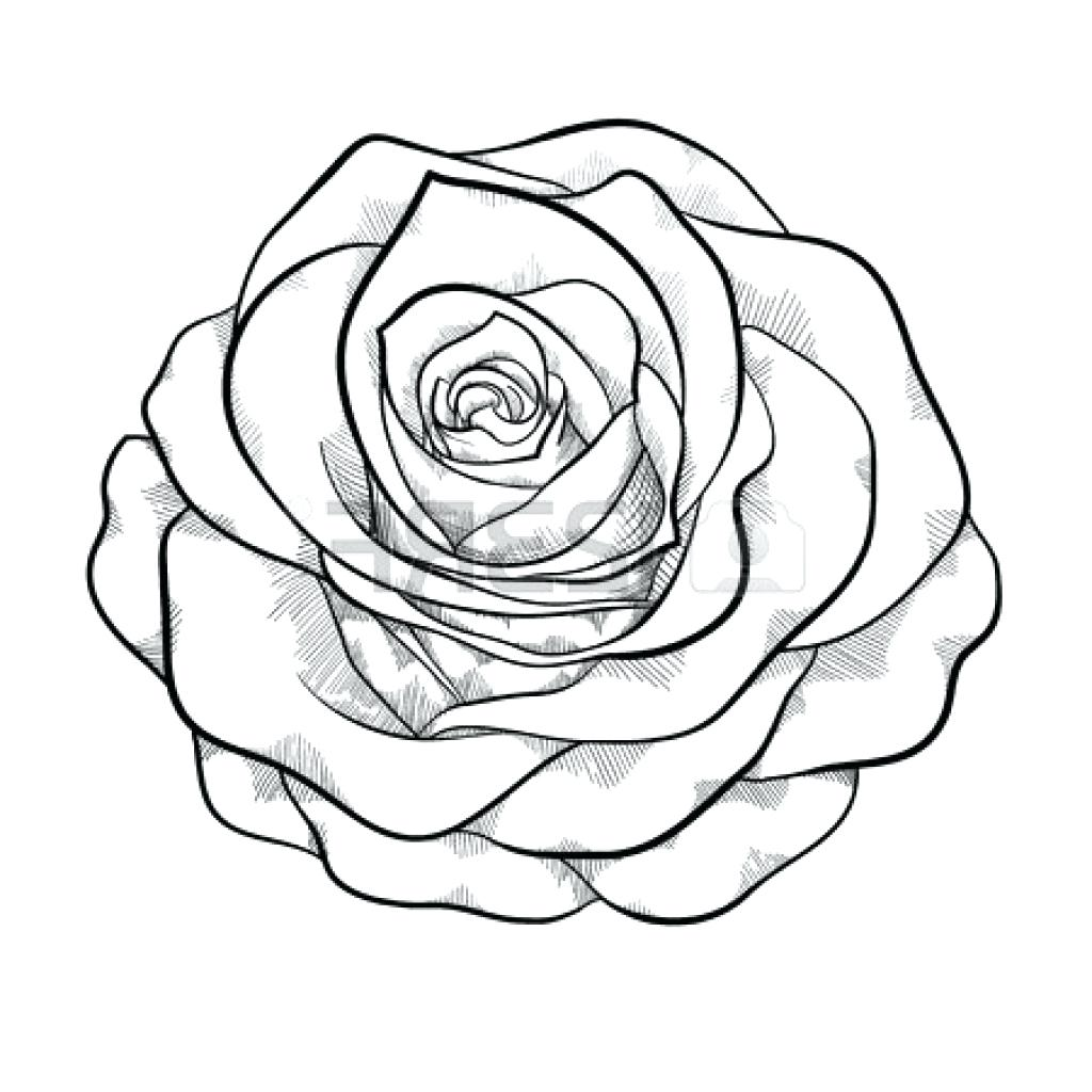1024x1024 Coloring Marvellous Rose Drawing Outline. Flowers Drawing Outline