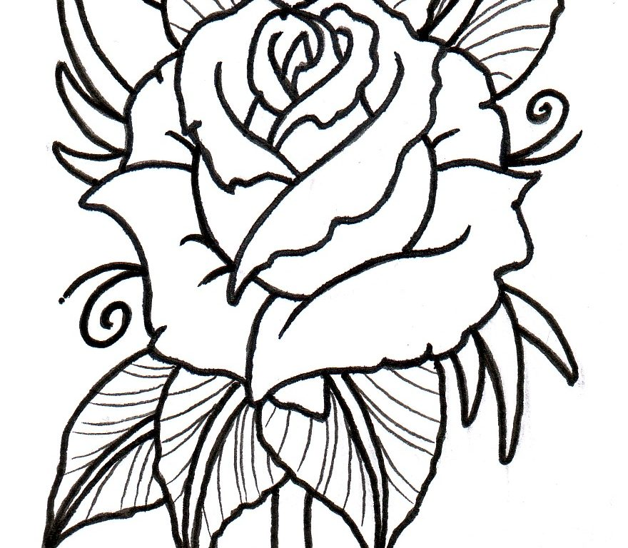 880x768 Download Rose Tattoo Drawing Outline