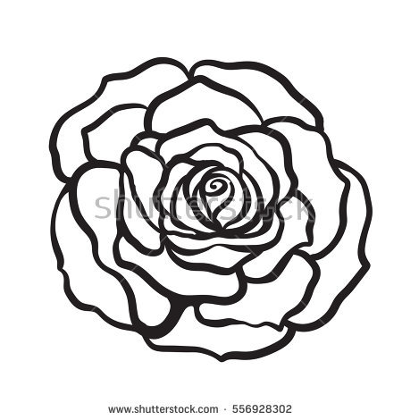 450x470 Drawn Rose Outline