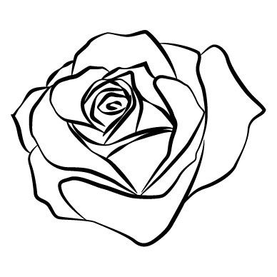 388x388 15 Best Rose Images Draw, Drawings And Watercolor