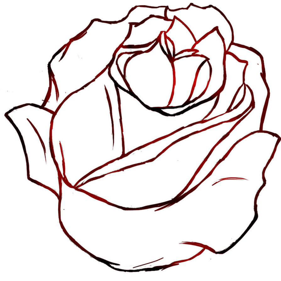 894x894 Red Rose(Outline) By Izzyfox127