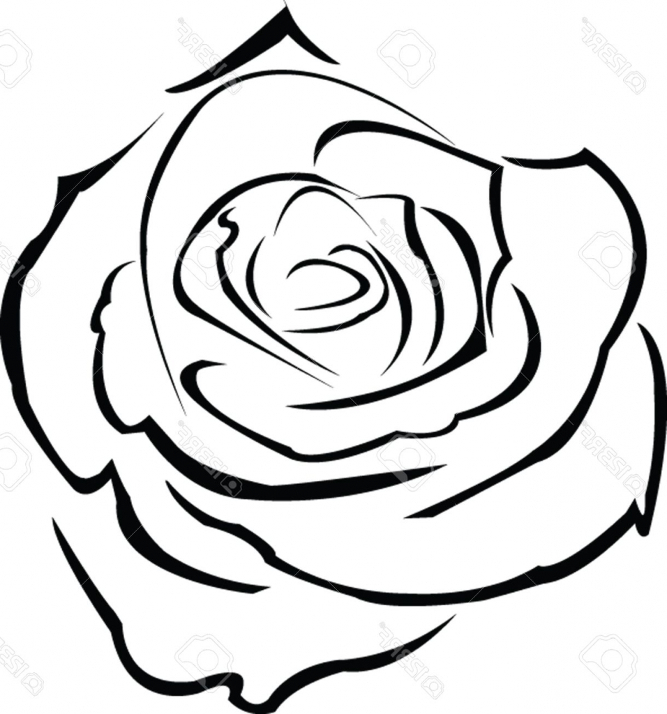 956x1024 Rose Flower Outline Drawing