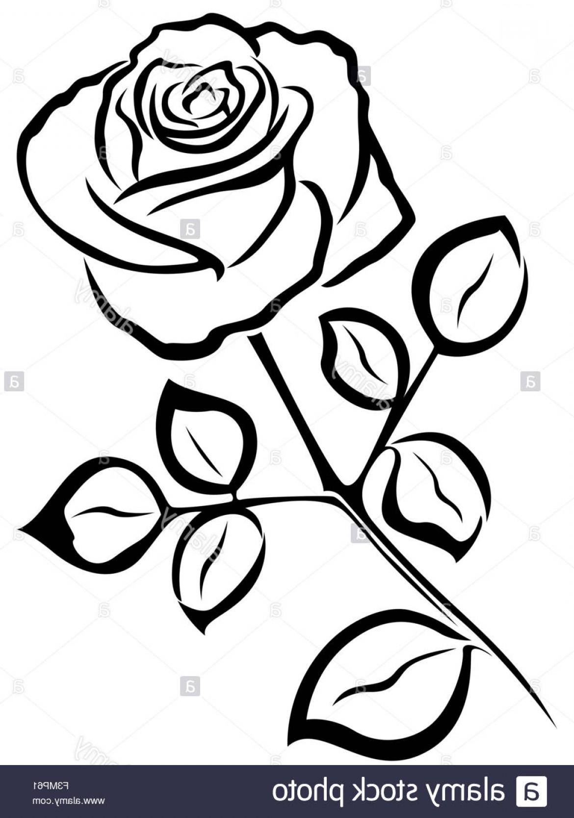1170x1668 Rose Flower Outline Drawing Free Outline Flower Vector Design