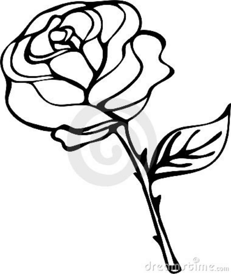 760x900 Rose Outline Clipart