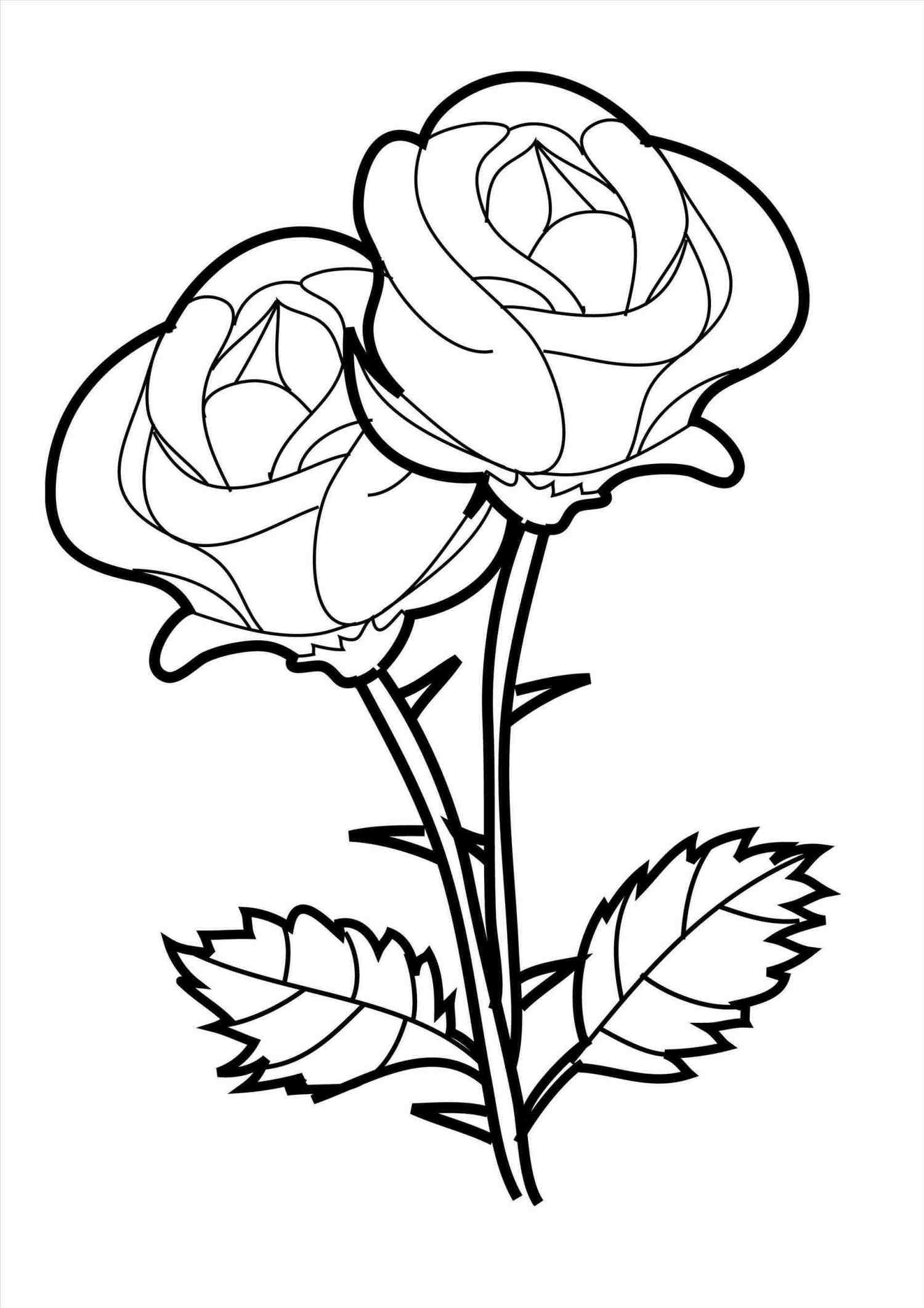 1500x2123 Open Rose Drawing Outline