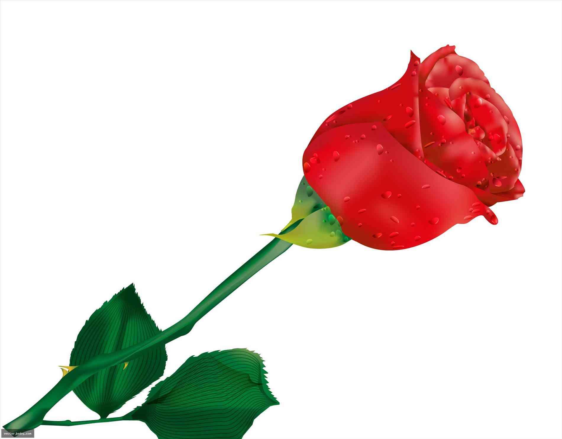 Rose Flower Clipart | Free download best Rose Flower Clipart on ... for Vector Rose Flower Png  303mzq