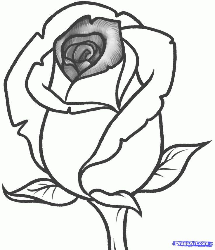 Rose Flower Drawing