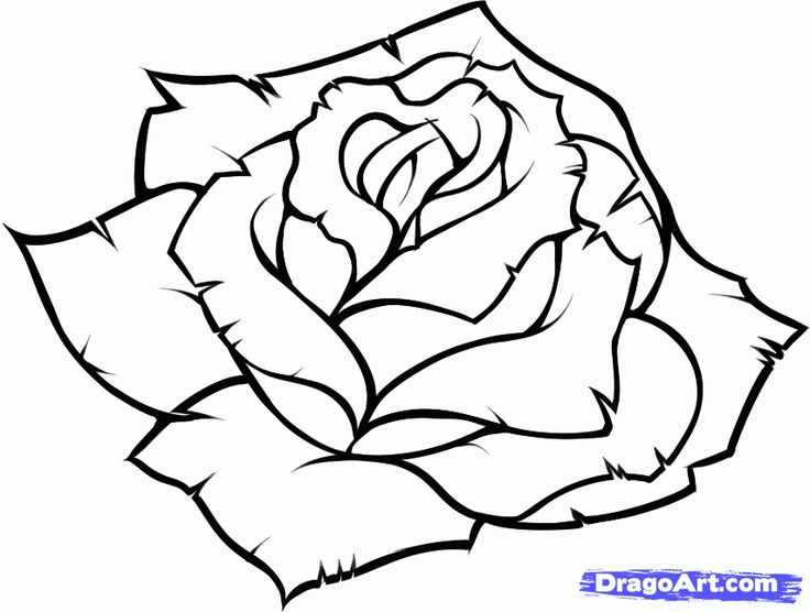 Rose Flower Drawing Free Download Best Rose Flower Drawing On