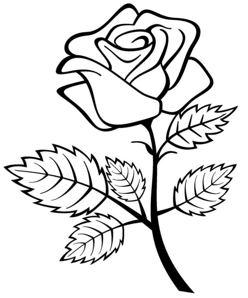 Rose flower drawing free download best rose flower drawing on 851x1024 rose flower drawing games thecheapjerseys Choice Image