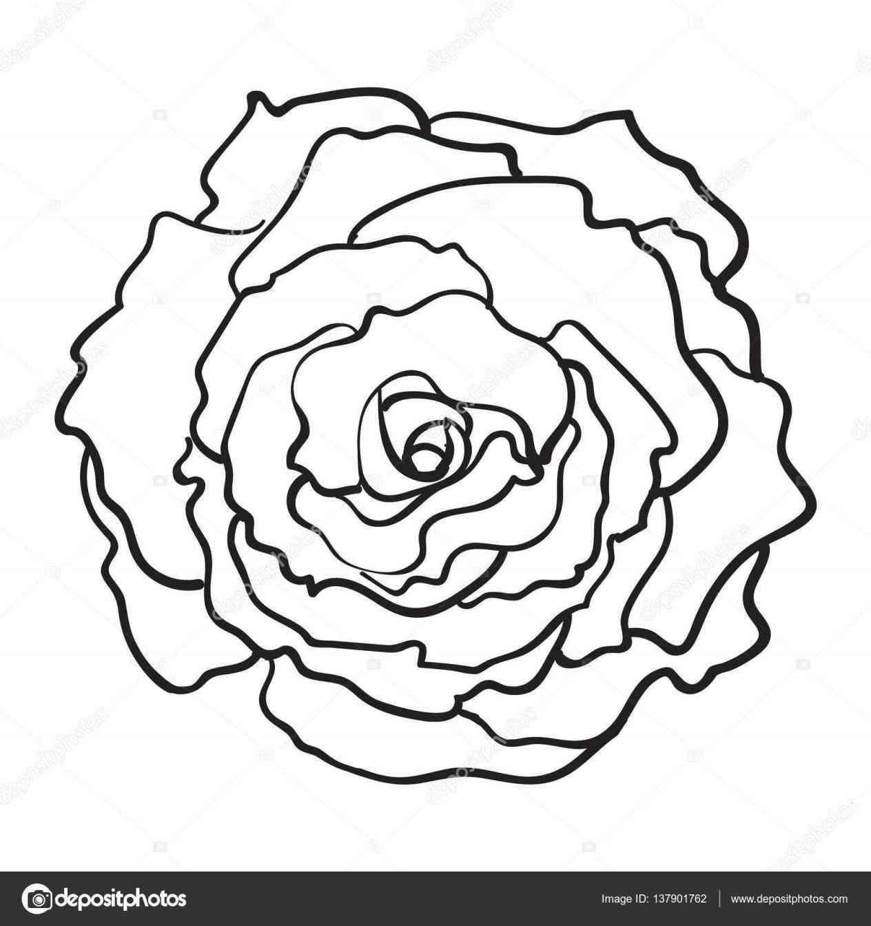 1264x1343 Drawings Ideas Best Open Rose Line Drawing Pencil