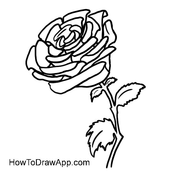 600x600 Learn How To Draw A Rose Step By Step. Easy Drawing Lessons
