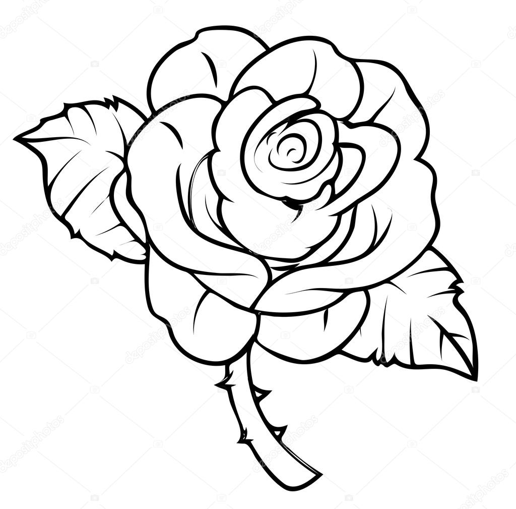 It is a picture of Versatile Line Drawing Rose
