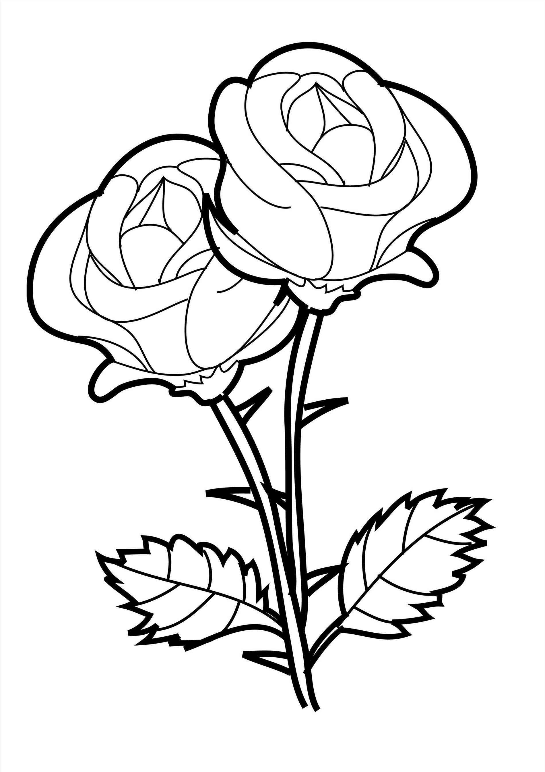 1899x2687 And Roses Digital Open Rose Line Drawing Two For Tuesday Tulips