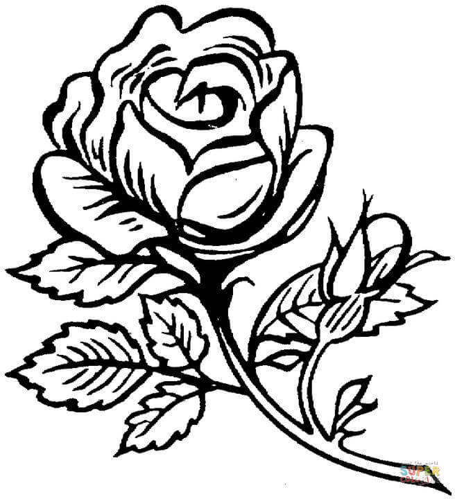 656x720 Roses Coloring Pages Free Coloring Pages