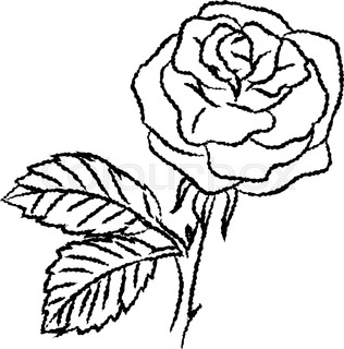 316x320 Vector Line Rose Frame. Great For Wedding Invitations, Greeting