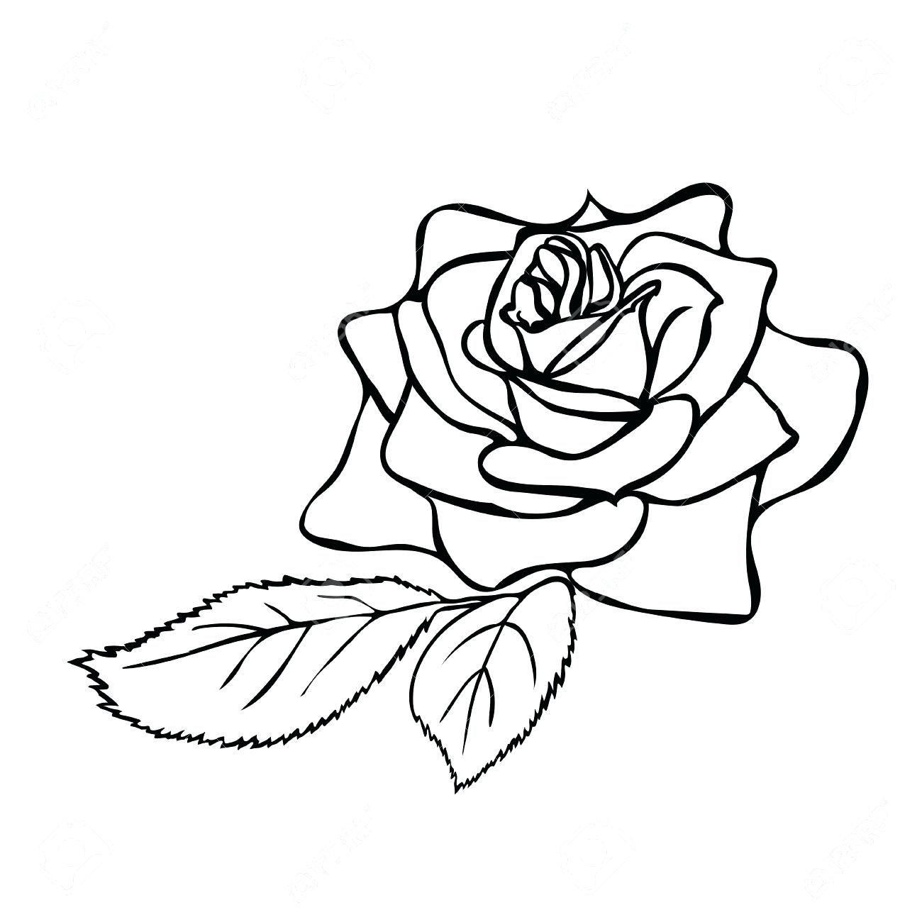 1300x1300 Coloring Marvellous Rose Drawing Outline. Flowers Drawing Outline