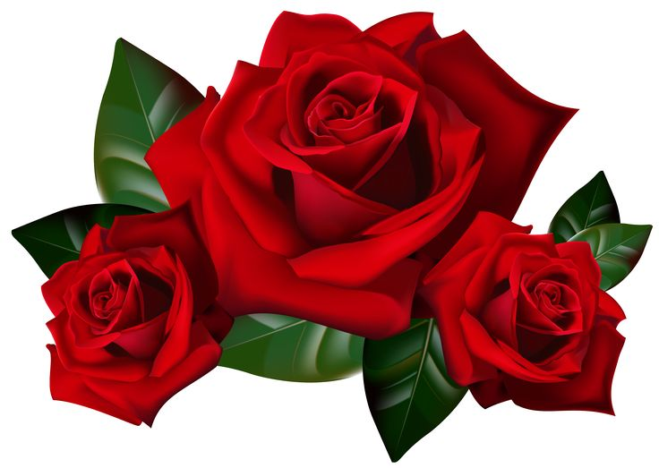 736x523 Red Rose Vector Clipart