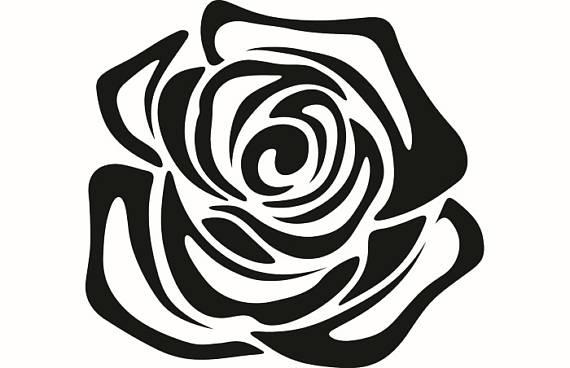 570x368 Rose