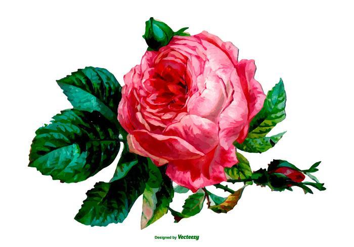 Rose Vector Png Free Download Best Rose Vector Png On Clipartmag Com