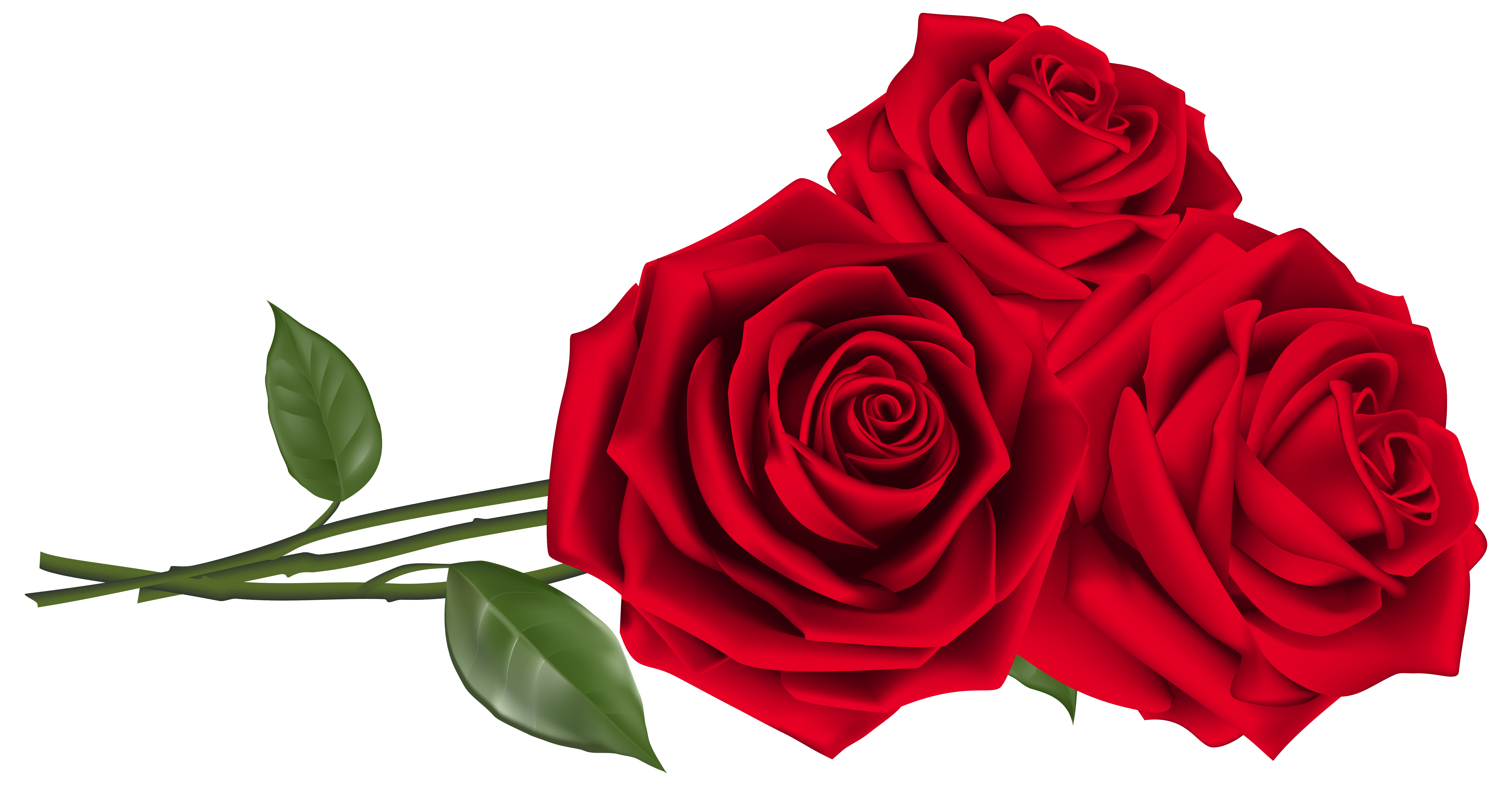 6007x3124 Three Red Roses Png Clipart Imageu200b Gallery Yopriceville