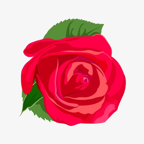 500x500 Red Rose Vector, Flowers, Green, Vector Png And Vector For Free