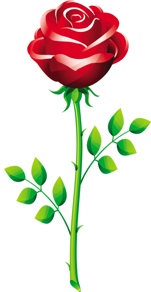 531x1024 Rose Vector 5 An Images Hub