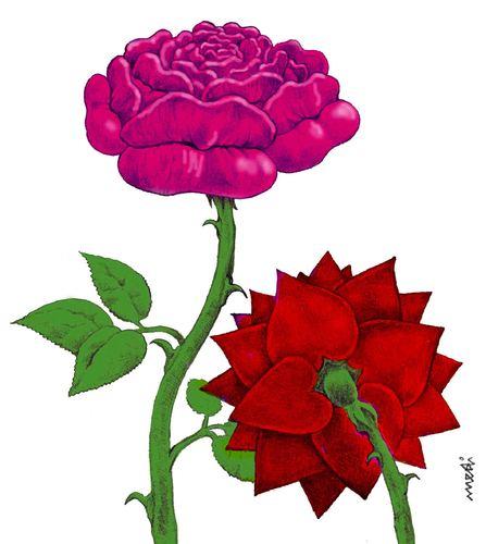 447x500 Passional Roses By Medi Belortaja Love Cartoon Toonpool