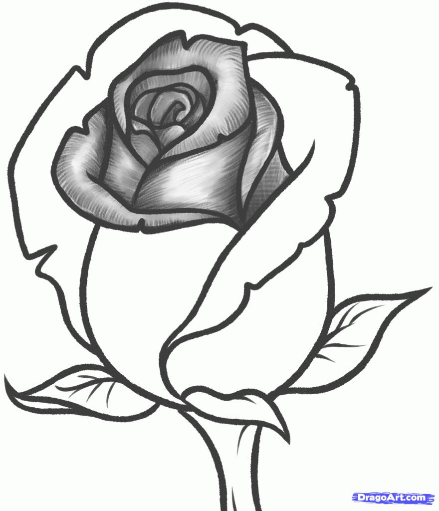 880x1024 Pencil Drawing Images Of Roses Drawn Hearts Big Rose