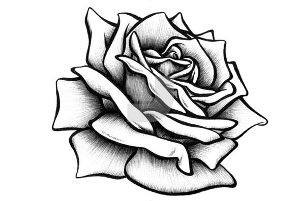 592x396 Rose Drawings