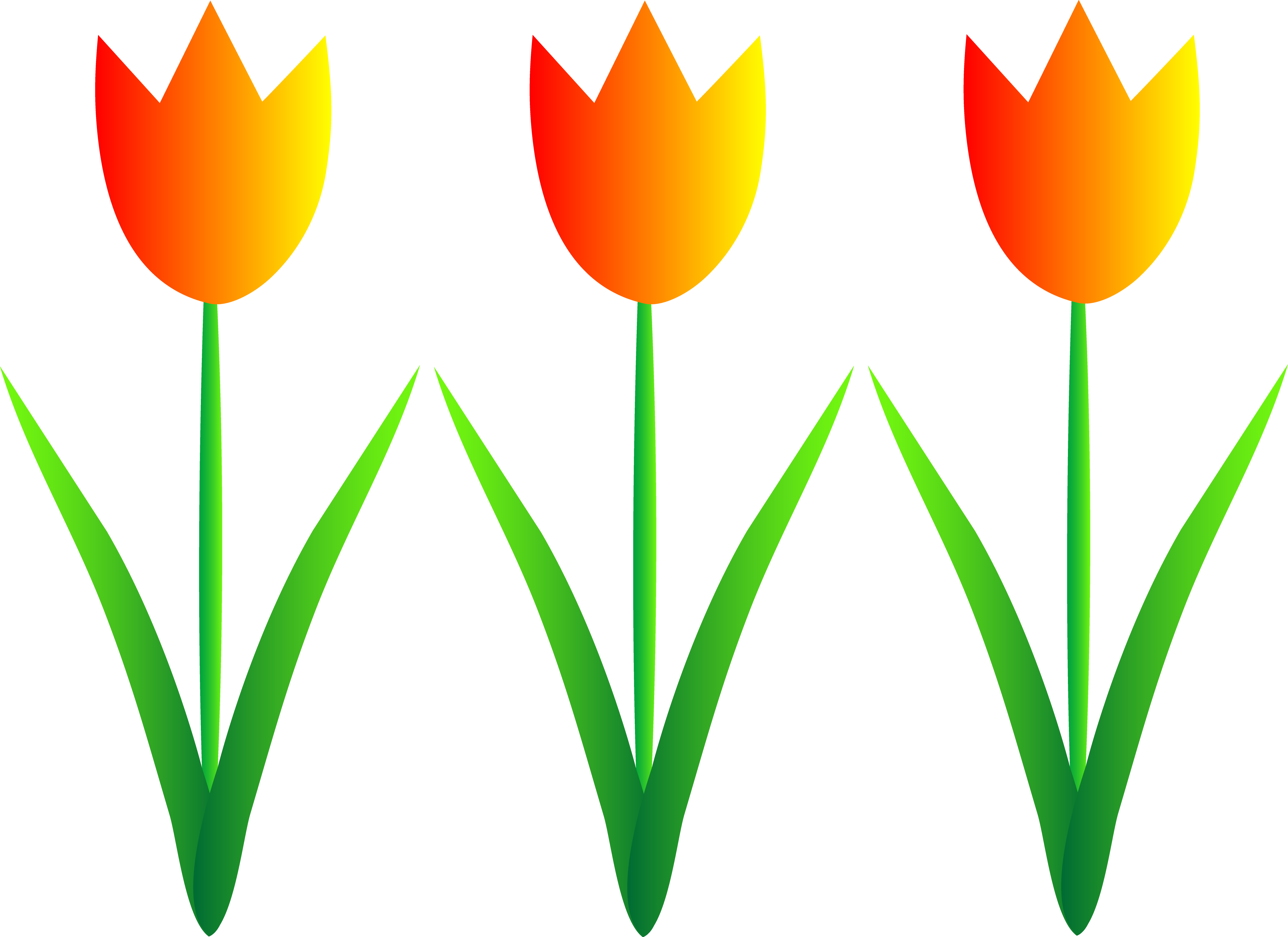 5367x3905 Three Colorful Spring Tulips
