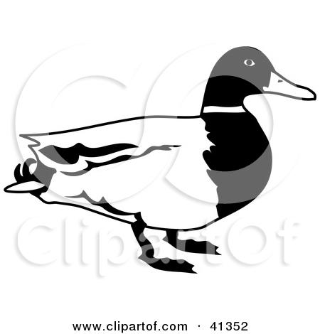 450x470 Mallard Duck Clipart Black And White Clipart Panda