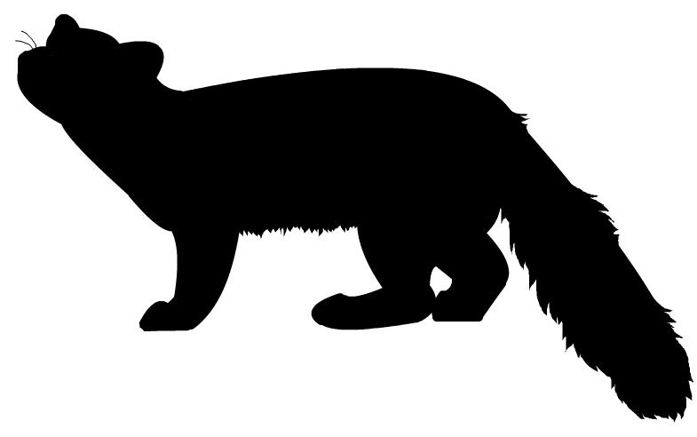 785x492 American Marten Silhouette By Grandechartreuse