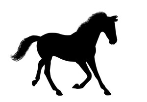 300x210 Silhouette Horse Running On The Ground Royalty Free Stock Image