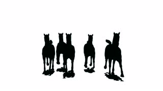 320x180 Close Up Of Feet Of Herd Of Running Horses, Black Silhouette