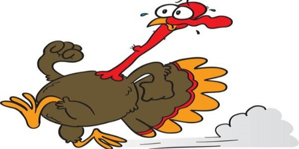 1000x500 Start Your Thanksgiving With A Snohomish County Turkey Trot