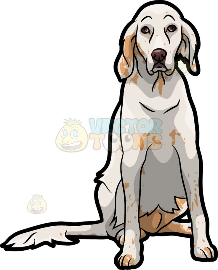 736x909 A Sad English Setter Pet Dog Spotty Face