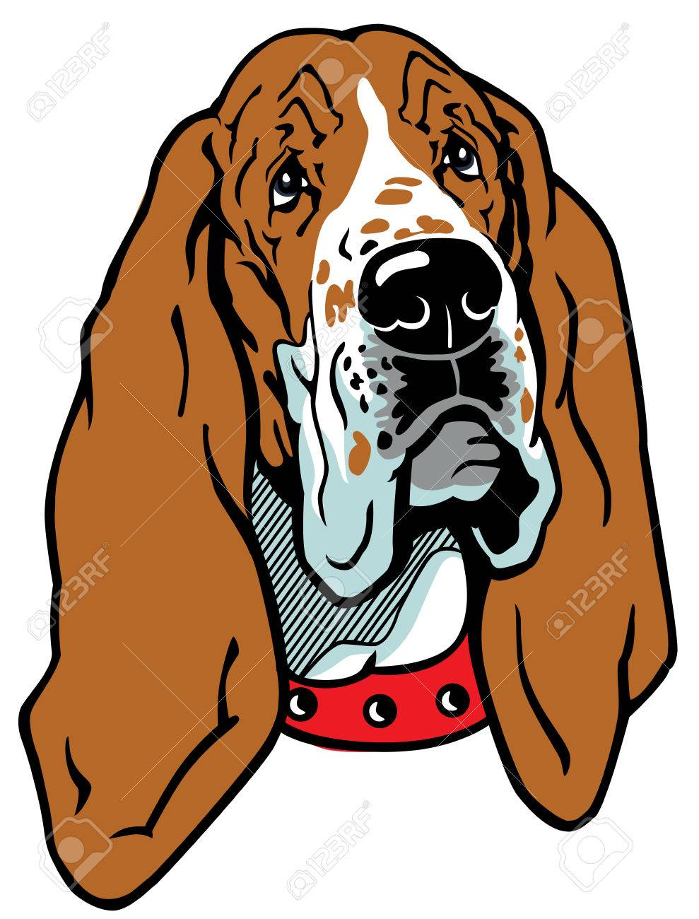 989x1300 907 Basset Hound Stock Illustrations, Cliparts And Royalty Free